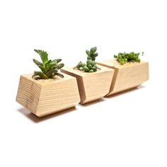 Pick your favorite succulent cuttings and display away in this handsome set of…