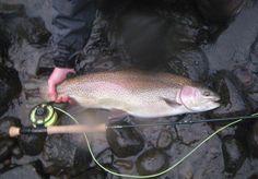 Rogue River Rainbow