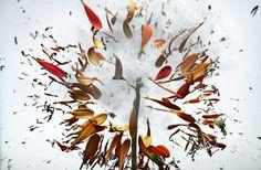 Link Image - Images by Frederik Lieberath