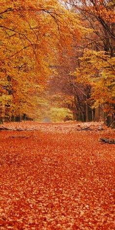 I can just imagine myself crunching through these leaves...awash in my own color ecstasy