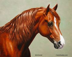 Chestnut Morgan horse oil painting. Horse portraits. Fine Art Prints and notecards available.