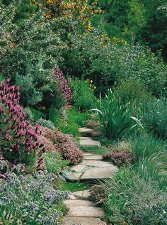 beautiful garden pathway.  I can't wait until my garden gets this mature!