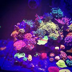 @livingreeforlando display tank 🔥🔥🔥#fish #aquarium #passion #reeftank #reef #allmymoneygoestocoral #reefaquarium #reefporn
