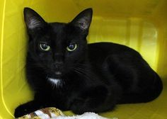 Crossposting to save lives: Ninja: Unwanted beauty is running out of time at Upstate kill shelter