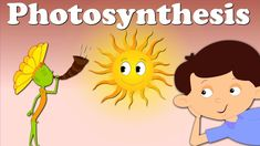 Easy Science for Kids Photosynthesis: How Plants Make Food and Energy? - learn fun facts about animals, the human body, our planet and much more. Fun free Photosynthesis: How Plants Make Food and Energy? Science Words, Science Videos, Easy Science, Science Experiments Kids, Science Activities, Food Science, Biology Projects, Science Projects, Plant Science