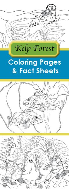 Kelp Forest Coloring Pages Fact Sheets