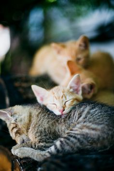sleepy kittens  ねむねむ…