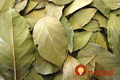 Organic Bay Leaves Laurus nobilis Whole / Healthy herbs Food / Choose ورق غار Laurel Leaves, Bay Leaves, Plant Leaves, Natural Spice, Natural Herbs, Food For Anemia, Bay Leaf Tree, Chinese Spices, Laurus Nobilis
