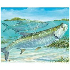 Magic Slice Magic Slice Silver Ling Tarpon by Steve Whitlock Non-Slip Flexible Cutting Board Watercolor Animals, Watercolor Cards, Michigan, Nature Artists, Wildlife Art, Types Of Food, Fly Fishing, The Great Outdoors, Photo Art