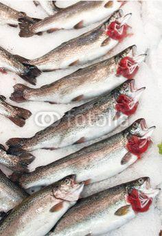 alabalık,balık,fish,tezgah,balık sezonu,avcılık,balık avı,balık tutmak,balıkçılık