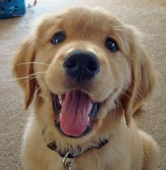 Google Image Result for http://cdn-www.dailypuppy.com/dog-images/doug-the-golden-retriever-11_35066_2009-10-06_w450.jpg  My love of dogs and this! i just love this! i love to wake up to him!!!!!!!