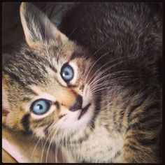 I found a forever loving home in #Montreal ~ Breckin, male tabby. From a litter of six rescued with mother. Photo by awesome foster mom Melissa A!  ~ www.facebook.com/cause4paws