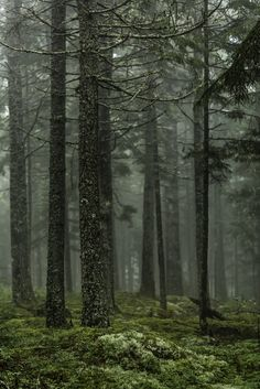 Summer Forest Fog by Mabry Campbell
