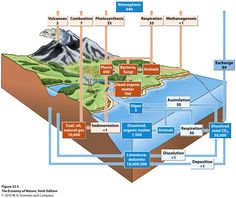 Ecosystem Diagram | CarbonCycle