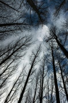 pixiewinksfairywhispers:    windy1466:Lunar compostion  Amazing shot… As the stark limbs reach into the sky toward a powerful moon.