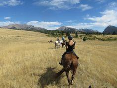 Ya Ha Tinda trip Canadian Horse, Black Canadians, Horses For Sale, Ranch, Guest Ranch