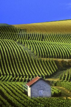 Wallpapers-catalog.com - Panoramic View of Vineyards Champagne France in 640x960 resolution.