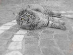 Miao....!!!