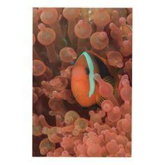 #fishing - #Clown Fish Among Anemones Wood Wall Art