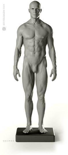 "Male Proportional figure: v.2 - basic study & general use 1:6 life-size, yet incredibly detailed, this desktop model shows ideal proportions & surface anatomy of the male human body. Clearly shows the influence of underlying muscle, bone & fat. Ideal reference & study tool. Recreated from a live athlete. Realistic hand-painted eyes. Aprox. 11.75""H x 2""D x 3.5""W"