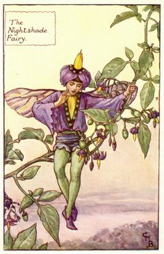 THE NIGHTSHADE FAIRY by Cicely Mary Barker.