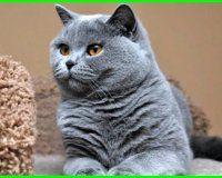 Nama Kucing Jantan Yang Bagus Lucu Dan Keren Ekor9 Com Piaraan Humor Kucing Kucing