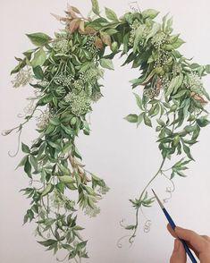 """이정진 Jung Jin Lee on Instagram: """"Women Artist Challenge Day2.-종이판넬 위에 수채화작업 (2017) * 안미순작가님 @hyedang_ 로 부터 이어 받은 이정진 작가입니다.^^…"""" Watercolor Leaves, Watercolor Texture, Watercolor And Ink, Watercolor Paintings, Botanical Drawings, Botanical Art, Botanical Illustration, Illustration Art, Illustration Botanique"""