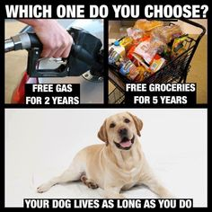 What would you choose? Bizarre Pictures, Funny Pictures, Mans Best Friend, Best Friends, Choose Quotes, Fun Fact Friday, Free Gas, Interactive Posts, Free Groceries