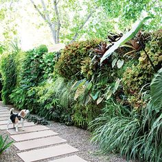 Living wall See how to create your own vertical garden inspired by a living wall in Paris designed by Patrick Blanc. This planting includes ferns, bromelaids, coral bells, spider plants, and elephant ears.