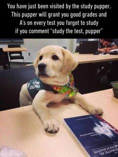 Brain Training For Dogs - Adrienne Farricelli's Online Dog Trainer Funny Puppy Memes, Funny Dogs, Cute Dogs, Cute Animal Memes, Cute Funny Animals, Cool Pictures, Funny Pictures, Brain Training, School Memes