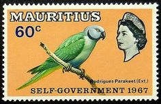 Rodrigues Parakeet (Extinct), Mauritius (1967)