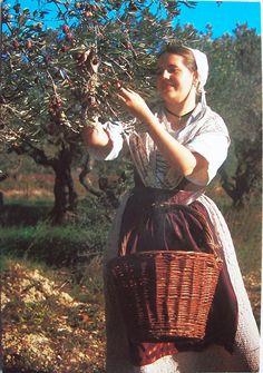 Folklore Provence Cueillette Des Olives Jeune Fille - PriceMinister
