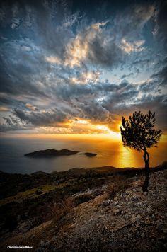 the tree on 500px by Nikos Chatziiakovou, Karlovasi, greece ☀ NIKON D7000-f/5-1/100s-8mm-iso100, 774✱1168px-rating:98.9 ◉ Photo location: Google Maps