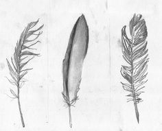 Feathers | Tanya Hendrie Illustration