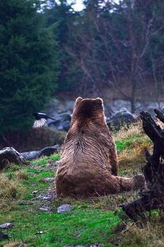 A bear having a 'moment' lol.  Awww, I just want to go and hug him!! <3