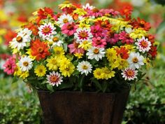 Bring color to sunny spots in your garden by planting a container full of sun-loving plants. Here are 15 flowers that can withstand all the sun and heat that summer brings. Full Sun Flowers, Summer Flowers, Amazing Flowers, White Flowers, Container Flowers, Container Plants, Container Gardening, Flower Show, Outdoor Plants