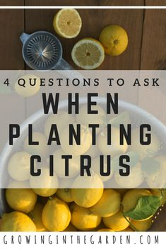 Citrus trees are long lived. Before you plant the tree, spend time choosing the right variety to meet your needs. Some oranges are best for juicing and others are best eaten fresh. Citrus trees (even dwarf varieties) produce a lot of fruit.