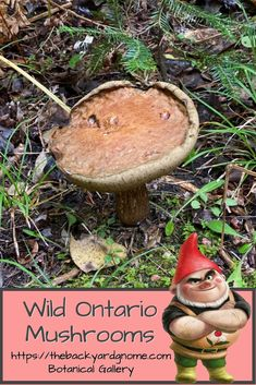 This mushroom was photographed on the Bruce Peninsula in Southwestern Ontario. Different Plants, Ontario, Stuffed Mushrooms, Backyard, Entertaining, Christmas Ornaments, Holiday Decor, Gallery, Green
