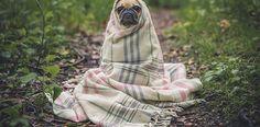 Doğal köpek şampuanı kullandığınızda hem kimyasal maddelerden kurtulmuş hem de köpeğinizi rahat ettirmiş olursunuz. Doğal köpek şampuanı nasıl yapılır?