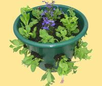 Bloom Master Australia - How to Create Visual Splendour with our Hanging Baskets and Planters