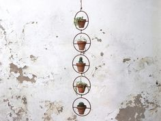 A charming clay pot in metal hanger for your tiny succulents or trailing plants. Bring that Junaglow look to life with this plant pot today! Mini Plants, Potted Plants, Hanging Basket Hooks, Affordable Wall Art, Metal Hangers, Indoor Garden, Indoor Outdoor, Terracotta Pots, Plant Holders