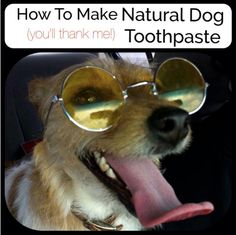 At Home Dog Teeth Cleaning Recipe Instructions...http://homestead-and-survival.com/at-home-dog-teeth-cleaning-recipe-instructions/