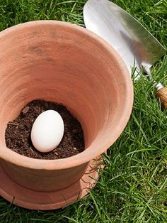 Placing one uncracked raw egg in a pot then cover with soil and plant will serve as a natural fertilizer for the growing season. redbookmag.com