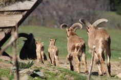Carnet des naissances 2015 du Parc Animalier d'Auvergne
