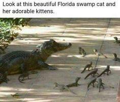 Beautiful florida swamp cat - http://jokideo.com/beautiful-florida-swamp-cat/