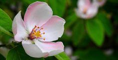 Spring, Pistil, Wood, Flower, Apple Flower, Apple Tree