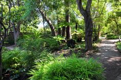 woodland garden with asian theme - Google Search
