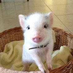 Cutie!!