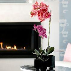 Orchids, Glass Vase, Decoration, Home Decor, Homemade Home Decor, Decorating, Lilies, Dekorasyon, Deko