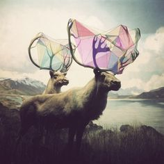 Graphic design play with moose antlers #art